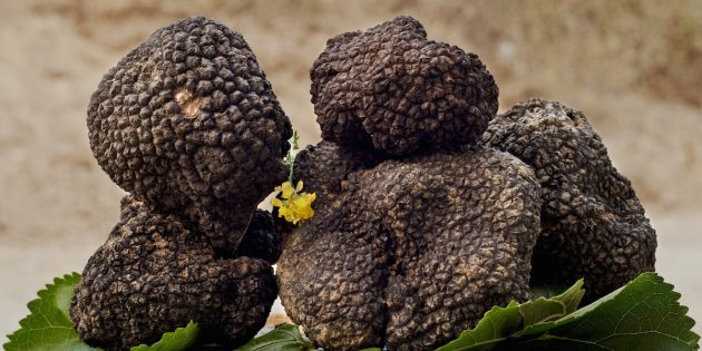 Alla scoperta dei tartufi siciliani